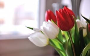 Flores tulipanes