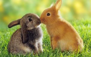 Una pareja de conejos