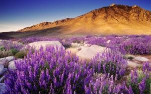 Montañas y flores moradas