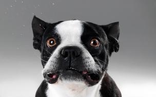 Caras de perros