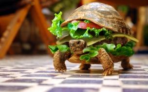 Tortuga hamburguesa