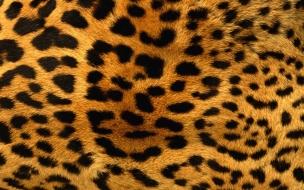 Piel de Leopardo