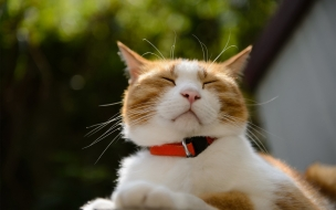 Un gato risueño