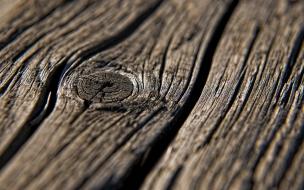 Textura de árbol
