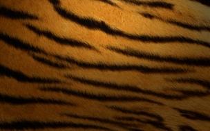 Textura de piel de tigre