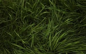 Textura de pasto verde