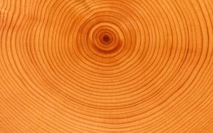 Textura de anillos de árbol