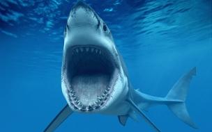 Un tiburón hambriento