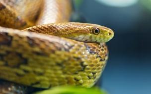 Ojos de serpientes