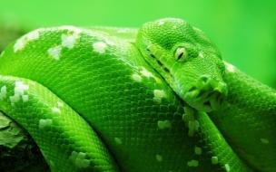 Serpiente color verde