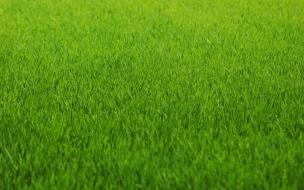 Textura de Grass