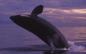Una ballena