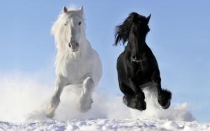 Caballo blanco y negro