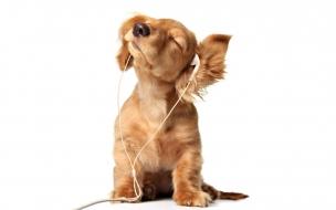 Perro con audífonos