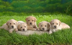 Pequeños perros