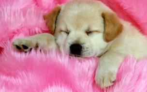 Un perro bebe