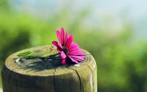 Flor sobre tronco de madera