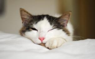 Fotografia de gatos