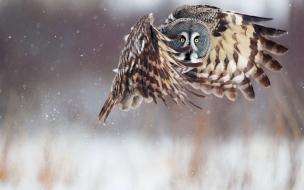 Búho en pleno vuelo