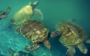 Tortugas buceando