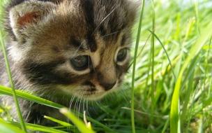 Gato paseando en el jardín