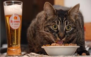 Un gato comiendo