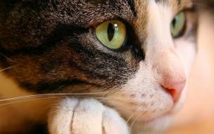 El rostro de un gato