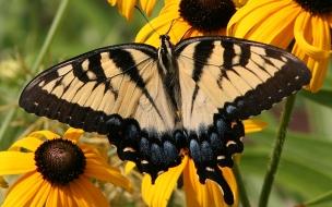 Una linda mariposa