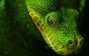 Cabeza de serpiente verde
