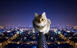 Un gato en la altura