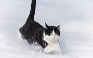 Gato saltando en la nieve