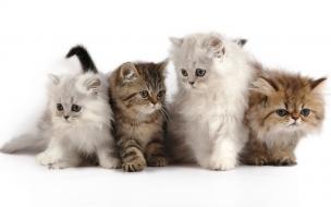 Bellos pequeños gatos