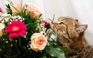 Un gato y rosas