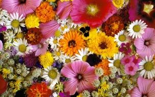 Jardin de muchas flores