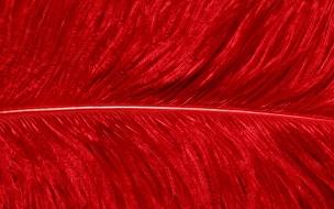 Textura de pluma