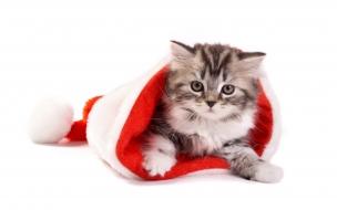Un gato en un gorro de navidad