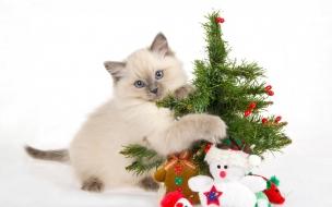Un gato y arbolito de navidad