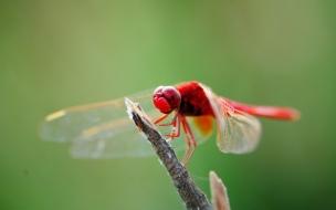 Una hermosa libelula