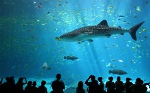 Animales marinos en acuario