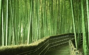 Paisaje lleno de bambu