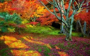 Arboles con hojas de colores