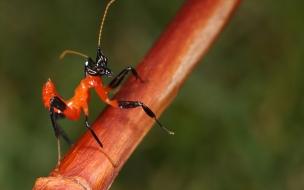 Fotos insectos macro