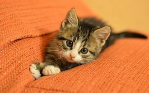 Un bello gato