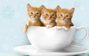 Tres gatos en una taza