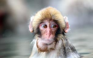 Un hermoso mono