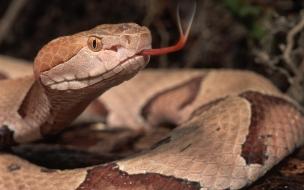 Serpiente con lengua afuera
