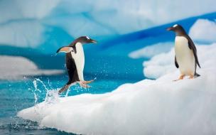 Pingüinos saltando