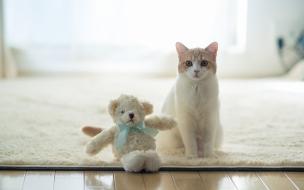 Un gato y su peluche