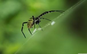 Una araña en telaraña