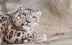 Fotos de leopardo